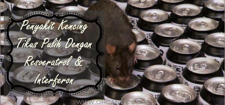 Testimoni Kencing Tikus: Pulih Dengan Resveratrol